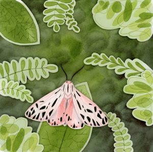 Pink tiger moth shadowbox art