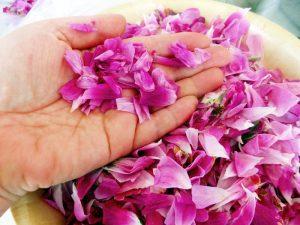 pofta-buna-gina-bradea-dulceata-naturala-fara-conservanti-de-trandafiri.jpg (2)