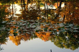 reflection2011FallHiddenLkGrdnsreflections1