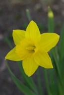 Spring2014AprilMisc 021