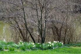 Landscape2April Spring 041
