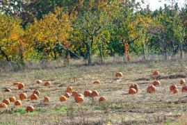 chaosfall-pumpkin-misc2009octoberstormdamage-113