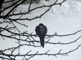 birdintreewtrclr2