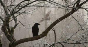 12 января – День Федоры, день Анисии. Осторожно - ведьмы нынче порчу наводят