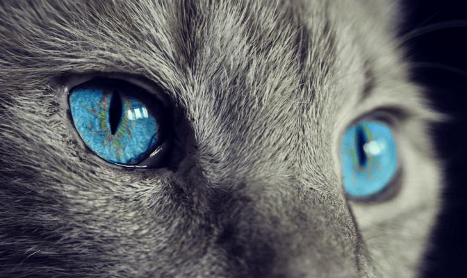 26 января — Ермилов день или День Ерёмы. Кот сегодня не врёт!