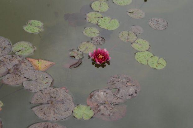 Наконец-то! 5 июня Никитский ботанический сад открывает свои парки для посетителей