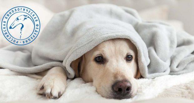 Кинологи: пять признаков, которые должны насторожить хозяина собаки