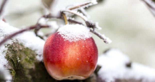 Холодный антициклон. Прогноз погоды в Крыму на 17 декабря