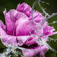 25 июля – Прокл-плакальщик. Роса сегодня - целебная