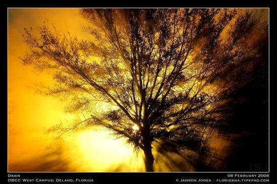dawn-by-janson-jones1