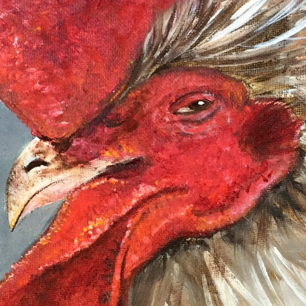 Rooster charles2
