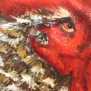 Rooster harold2
