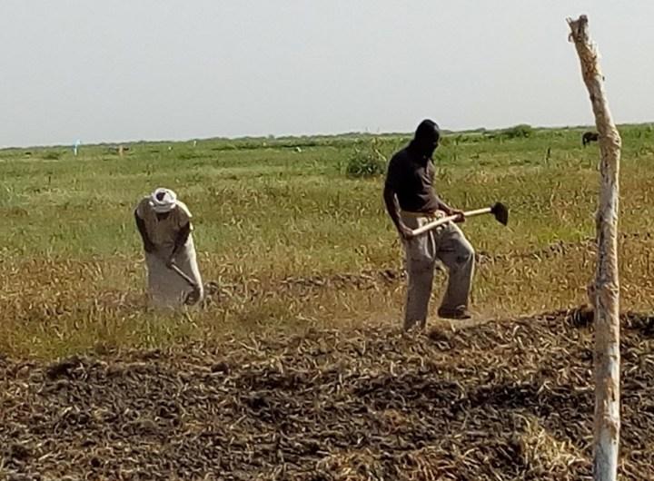 distribution-de-produits-chimiques-aux-paysans-du-trarza-pour-lutter-contre-les-insectes-et-les-rats-qui-detruisent-leurs-champs