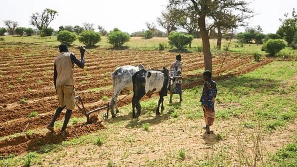 projet-d-aide-aux-agriculteurs-et-eleveurs-face-au-covid-19-mauritanie