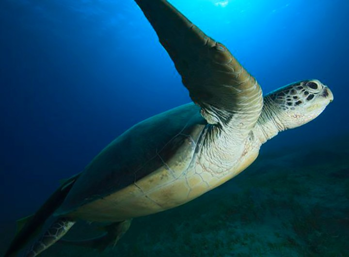 Madagascar : Dix-neuf personnes décèdent, dont neuf enfants, après avoir mangé une tortue de mer