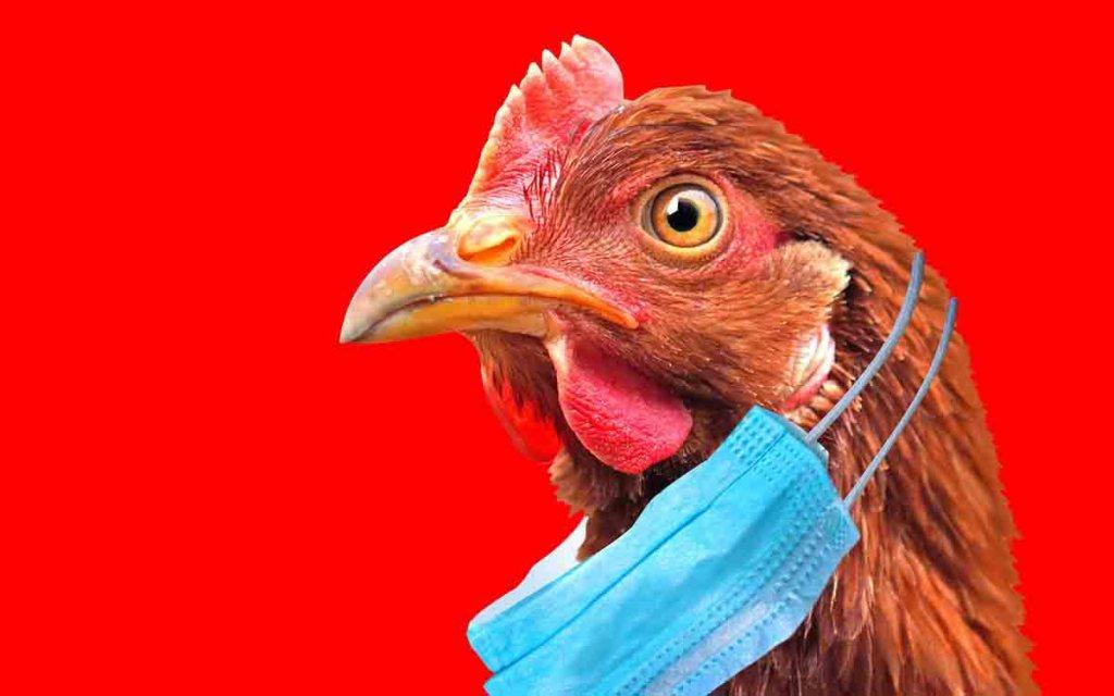 Chine : Un cas humain de grippe aviaire H10N3 confirmé, une première mondiale