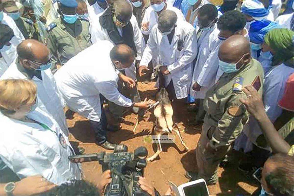 Bassiknou: Lancement de la campagne de vaccination du bétail au niveau de la moughataa