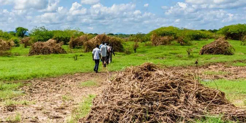 Côte d'Ivoire, l'entrepreneur qui veut transformer les déchets agricoles en richesse