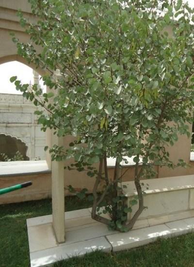 Grave of Babur's Niece Babur Gardens/Bagh-e-Babur in Kabul