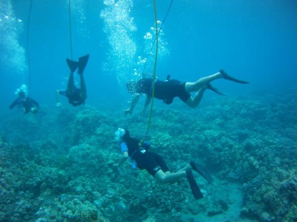 SNUBA Diving Shoreline SNUBA