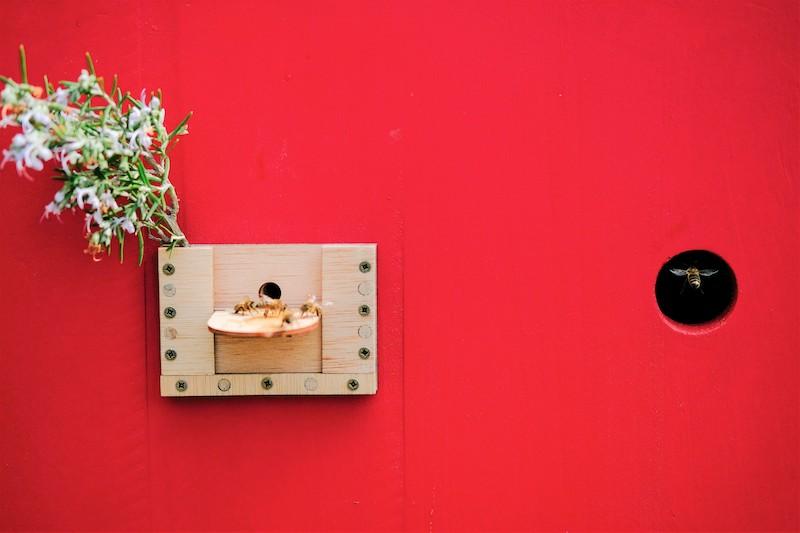 Détail du studio d'enregistrement pour abeilles