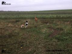 осенняя охота с легавыми