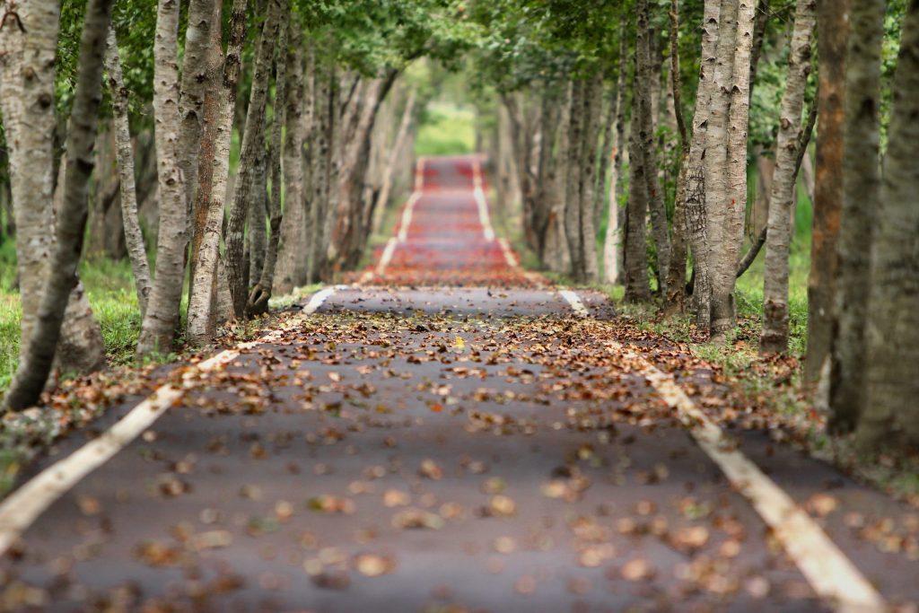 croatia-path-pointers-travel