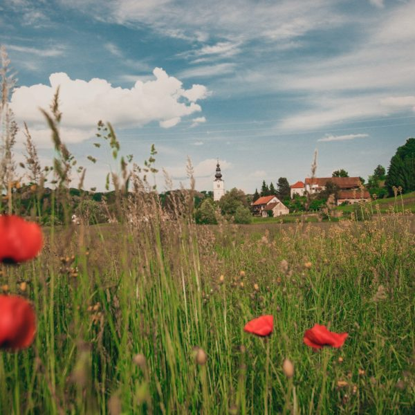 Zagorje-landscape-tulips-pointers-travel
