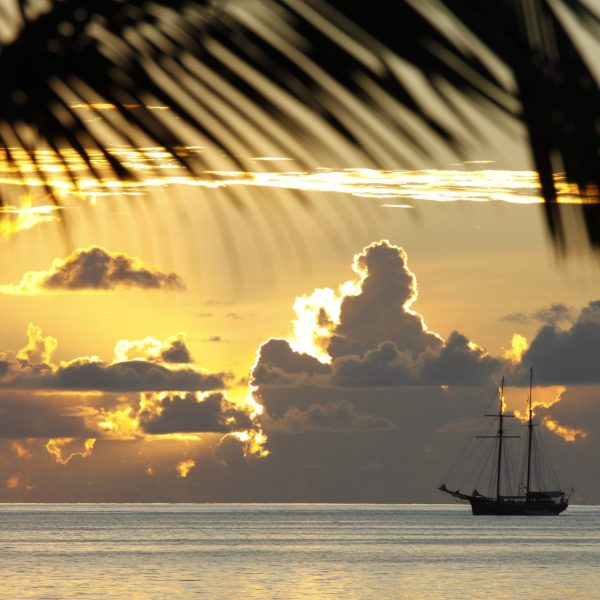 seychelles-palm-pointers-travel