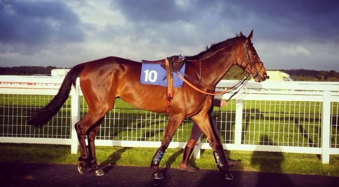 Point-to-point champion crowned at Exeter's finale next Tuesday