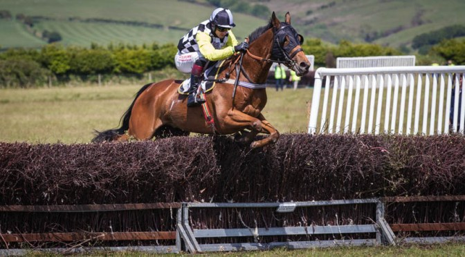 Report & Results: Tiverton Staghounds Point-to-Point  – Bratton Down Sunday 11 June 2017