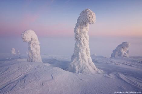 Sentinels Finland