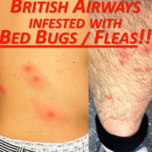 BA Bed Bugs