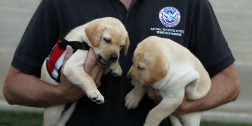TSA Flunked Dogs