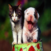 Cute Cat and Dog Puzzle