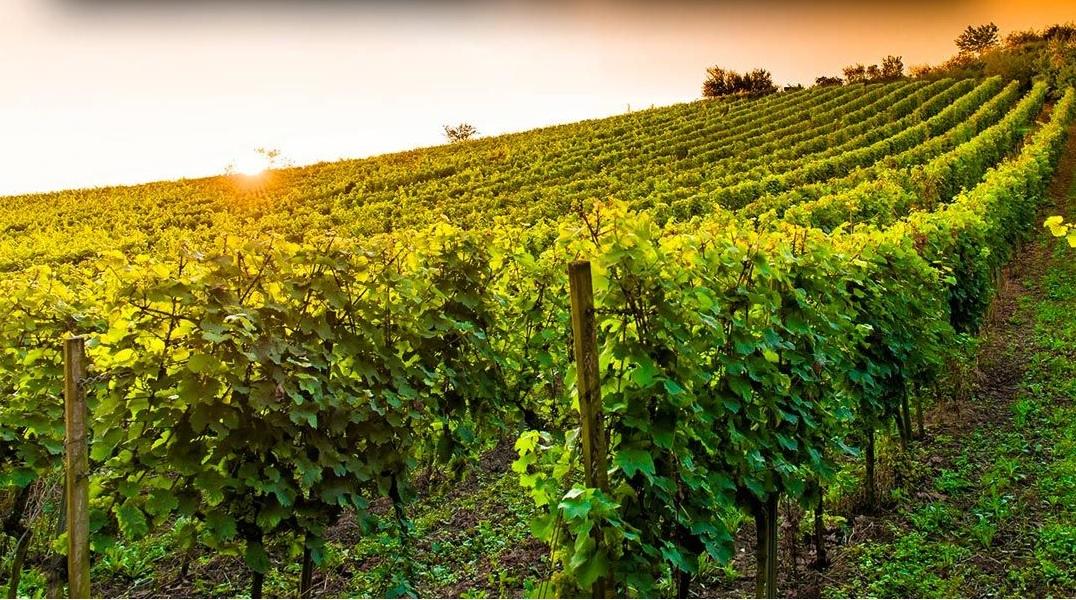 Prescott Wineries and Breweries