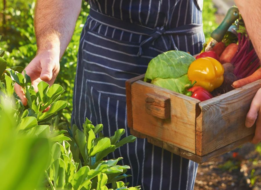 PointofSale chef picking fresh veggies eco-friendly restaurant ideas
