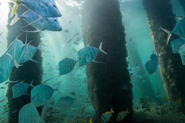 Underwater Fish