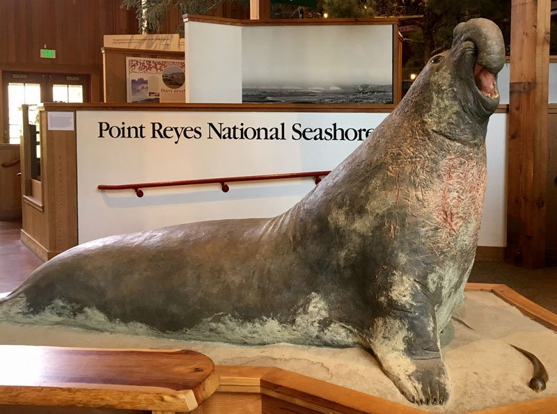 Elephant Seal by Bridget Keimel, at Bear Valley Visitor Center in Olema