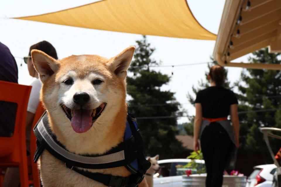 dog friendly restaurants point reyes national seashore