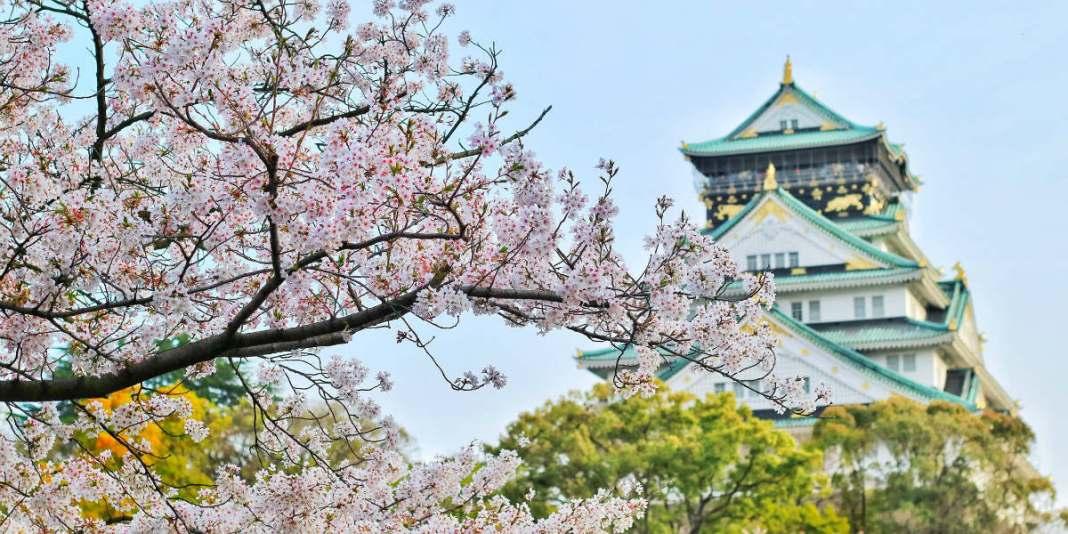 Melihat Bunga Sakura Selain Di Jepang Indonesia Salah Satunya