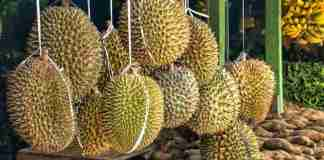 Durian kuliner medan