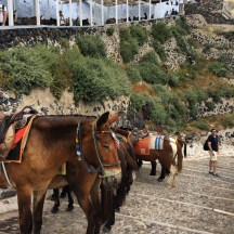 Donkeys of Santorini... mean things