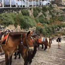 Donkeys of Santorini... mean things