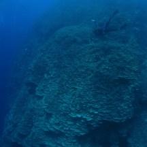 Huge coral formation