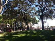 A Park in Manly