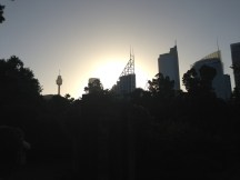 Sydney Skyline thru the Garden