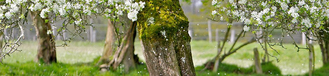 Bandeau pétales de fleurs en pluie