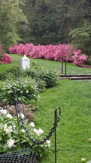 Botanicals Azalea Woods