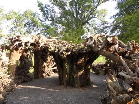 Hannah - Hillersdon stumpery